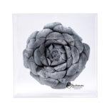 Balushka Paper Floral Artistry