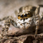 OMG Bugs by Alberto Alanis